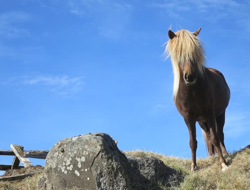 Pony mit ebensolchem